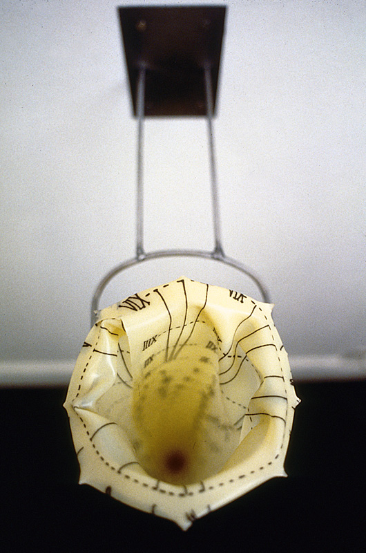 Esophagus (Detail)
